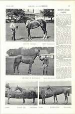 1896 Horse Race The Heath Stud Farm Helen Nichol Paris Iii Ghislaine Quaesitum