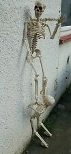 Halloween 3ft pose n stay skeleton perfect for decoration or parties!