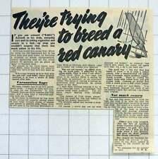 1952 Eddie Ashwell Southend Sweetshop Breeding Red Canary