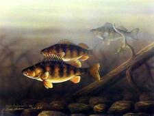 "Mark Anderson ""On The Rocks Perch Print-Signed and Numbered Artists Proof"