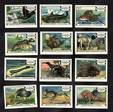 Unusual Animals & Birds #1 Full 12 Stamp Card Set 1930 Meurisse Nando Pangolin