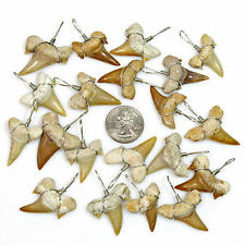 20 pc Lots XL Wire Wrapped Shark Tooth Pendants Great Sharks Teeth for Necklaces
