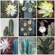 20 seeds of  Cereus mix,seeds cacti mix, succulents seeds mix   C