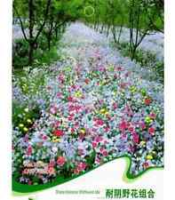 FD1461 Colorful Tolerance Wildflowers Mix Seed Flower Seed ~1 Pack 200 Seeds~