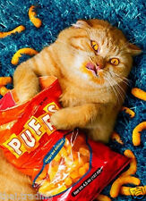 """Funny Fat Cat Lying Eating Snack Animal Photo Fridge Magnet 2""""x3"""" Collectibles"""