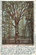 Leipzig, Baum, Große Eiche, Ansichtskarte von 1902, Bahnpoststempel Leipzig-Hof