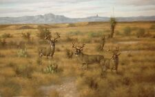 600 + DEER David Drinkard GICLEE SOUTH TEXAS Looks like an original painting.