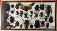 REAL EXOTIC HUGH 26 INSECT DISPLAY CICADA TAXIDERMY ENTOMOLOGY BEETLE INSECTS