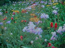 BUTTERFLY HUMMINGBIRD 15-VARIETY WILDFLOWER SEED MIX    BUY-1-GET-1