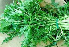 1000 MIZUNA JAPANESE MUSTARD SALAD MICRO  GREENS Seeds Non GMO Seeds Organic