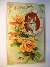 BIRTHDAY LUCK antique used embossed postcard CHROMOLITHOGRAPH kitten/cat w/roses