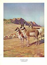 "1957 Vintage FRANCIS LEE JAQUES ""PRONGHORN ANTELOPE"" Color HUNTING Lithograph"