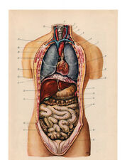 Vintage Medical Anatomy Human Organ Illustration Chart Real Canvas Art Print New