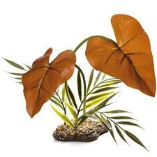 Komodo Rainforest Canopy Reptile Vivarium Terrarium Rainforest Plant