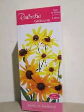 New 2 plants in  Box for Sale - Perennial Collection ( Easy to Grow )  Goldsturm