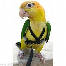 THE AVIATOR PARROT HARNESS & LEASH - EXTRA SMALL - RED