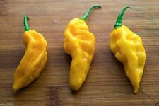 FATALII  CHILI PEPPER - 25 SEEDS -One of the Hottest Chilli - 300,000 SHU Scale