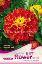 1 Bag 60 Seeds French Marigold Tagetes patula Flower Seed A019