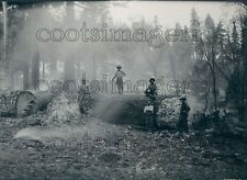 1923 Sierra National Forest Workers Barking Process on Sugar Pines Press Photo