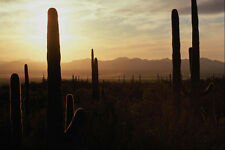 611054 Sunset Over Sonoran Desert A4 Photo Print