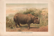 1895 VICTORIAN NATURAL HISTORY PRINT ~ INDIAN RHINOCEROS