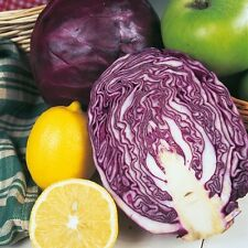 Cabbage - Red Drumhead - 500 Seeds
