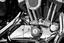 Kuryakyn Chrome Tappet / Lifter Block Accent Cover for Harley Sportster XL 06-15