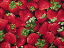 STRAWBERRY REALISTIC STRAWBERRIES FRUITS FOOD ITEM COTTON FABRIC BTHY