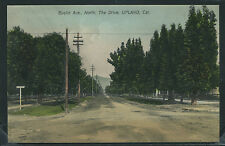 CA Upland H/C ROTOGRAVURE 1910's EUCLID AVENUE North THE DRIVE by Woods H-C 109