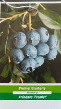 Premier Blueberry Plant Fruit Bearing 4'-5' Blueberries Healthy Roots Plants
