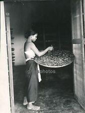 ANNAM c. 1940 - Vers à Soie sur les Muriers - DIV162