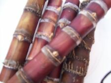 Raw Sugar Cane purple-red-black 6 pieces FLORIDA PLANT 5 in Organic Sugarcane