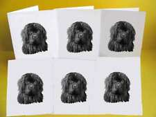 Newfoundland Dog Notelets / Blank Cards and envelopes pack of 6, A6 Small