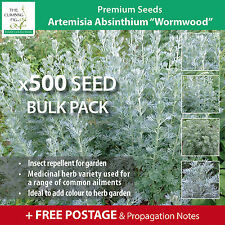 "ARTEMISIA ABSINTHIUM ""Wormwood"" seeds. Herb used as insect repellent outdoors."