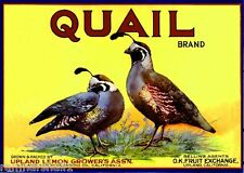 Upland San Bernardino California Quail Lemon Citrus Fruit Crate Label Art Print