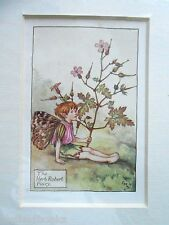 CICELY MARY BARKER - The Herb Robert Fairy Vintage Flower Fairies Mounted Print