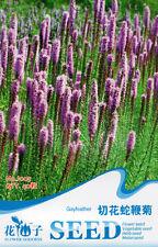 1 Pack 40 Button Snakeroot Seed Liatris Spicata Cut Flower Garden Flower J005