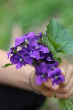 30 Graines Violette Parfumée Fleur Jardin & Bouquet (Viola) Semillas Samen Seeds