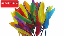 Quill Feathers Coloured For Arts And Crafts Mixed  Colours Pack Of 40 Feather
