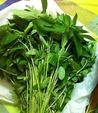 Egyptian Spinach,1000 Jute Seeds,Saluyot, Molokhia, Plant Spring Or Summer