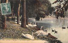 BR78338 lyon au parc le coin des cygnes swan  france