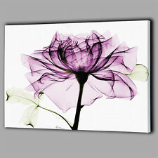Purple Light Flower Canvas A2 Large Wall Art Big Gift Picture Plum Rose O76