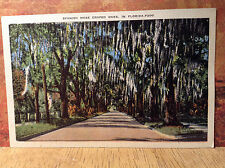 Spanish Moss Draped Oaks Florida Street Vintage Postcard Linen Color Unposted