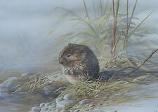 Mike Nance. Framed print of a Water Vole (Ratty from Wind in the Willows).