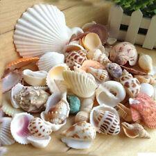 100g Mixed Sea Shells Beach Shells Craft SeaShells Aquarium Decor NEW