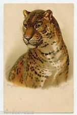 signé HELENA MAGUIRE. LEOPARD  .Gaufré. Embossed.