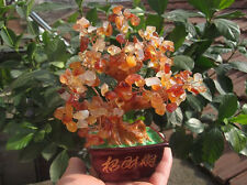 290-310g AAA++ LUCKY TREE!!! Natural pretty Red agate crystal gem tree  SJS02