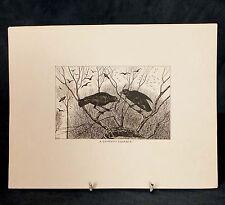 Wonderful, rare folio set of hand Pen & Ink wash images of Birds - 1907