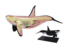 ORCA WHALE ANATOMY MODEL/PUZZLE, 4D Vision Kit #26099  TEDCO SCIENCE TOYS