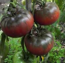 TOMATO, BLACK FROM TULA TOMATO SEED, ORGANIC, NON- GMO, 25 SEEDS PER PACKAGE